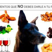 Nunca le ofrezcas ninguno de estos 10 alimentos a tu perro