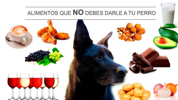 alimentos que no debes dar a tu perro
